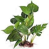 DIGIFLEX Decoración Hojas Verdes para Acuario 20cm Plantas Artificiales para Acuarios Que Lucen como Plantas...