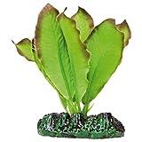 ICA AP1101 Anubias de Aquatic Plants Seda