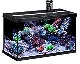 Eheim Aquastar 63Marin - Acuario para acuariofilia, Color Negro, 2x 12W, 63L