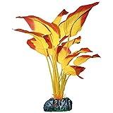 ICA AP1180 Anubias de Aquatic Plants Seda