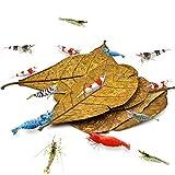 Sungrow Catappa Shrimp Leaves, 18-23 Cm, Proporciona Refugio Y Alimento, Fuente Adicional De Nutrición,...