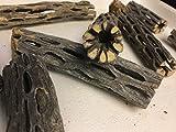 Cholla Cactus Wood (2 unidades de aprox. 2 cm de diámetro, 8 y 15 cm de largo), de madera Vuka para gambas y...