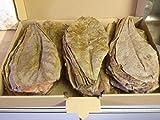 seemandel Árbol Hojas XL (100pieza/aprox. 20cm)–A original de producto de la marca catappa de Leaves...