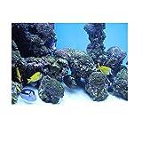 PVC Coral Acuario Fondo Submarino Poster Fish Tank Decoraciones para Pared Sticker Submarino Reef Pattern (61...