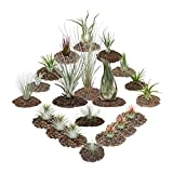1 set of 20 plants including 3 XXL plants