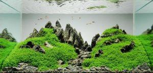 Accesorios Aquascaping