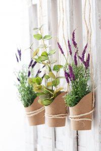 Complementos para Plantas