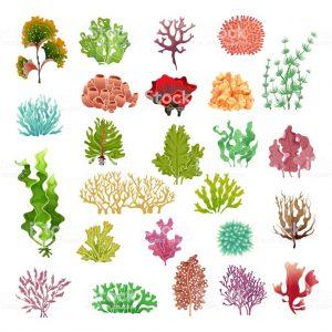 Plantas Coral