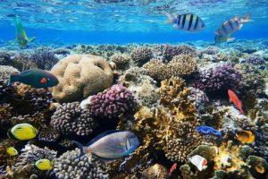 Red Sea Coral Pro