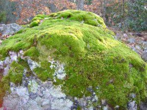 Rocas de Musgo