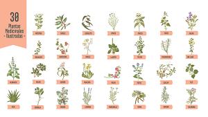 Plantas Naturales de Acuario