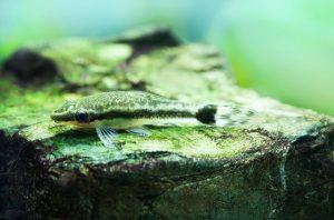Crece y mengua: Cultivar y controlar las algas en su acuario