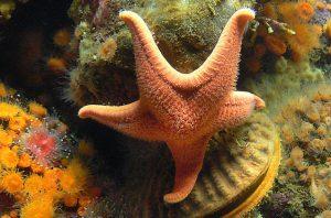 Los 3 mejores invertebrados marinos para principiantes