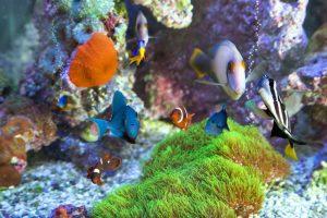 Los mejores filtros para acuarios grandes