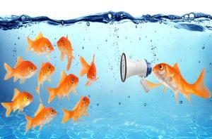 Los peces de colores pertenecen al exterior