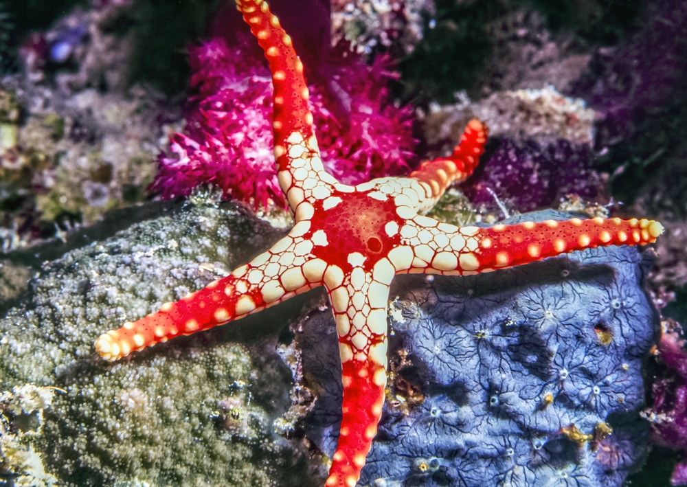 marble starfish in aquarium