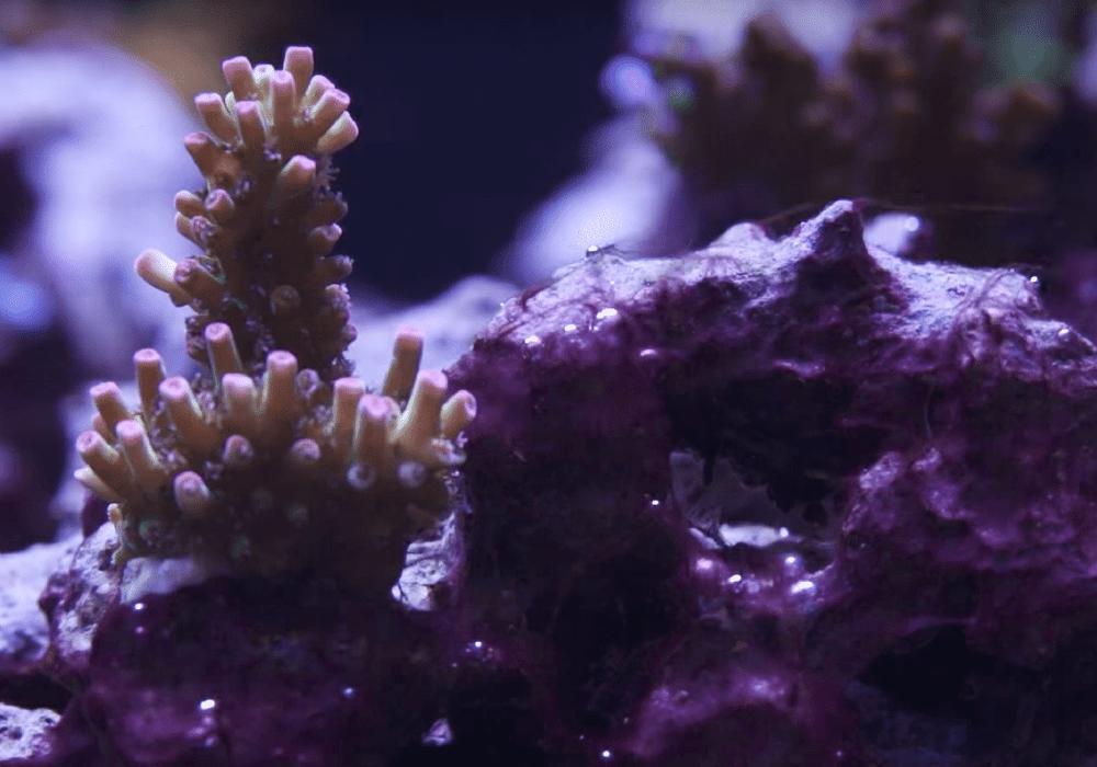 red slime algae