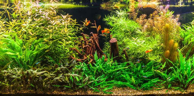 How to decorate a fish tank with plants