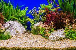 Los 3 principales sustratos a utilizar en los acuarios plantados