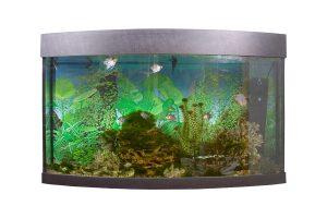 Los 3 tipos más populares de filtros para acuario